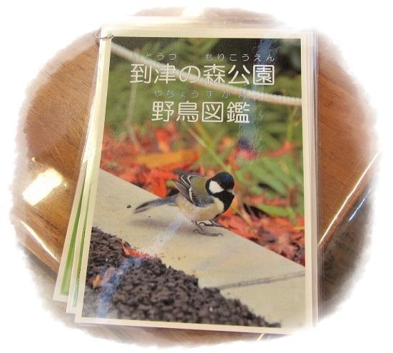 20190127_野鳥観察-4-1.jpg
