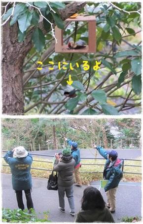 20190127_野鳥観察-6-1.jpg