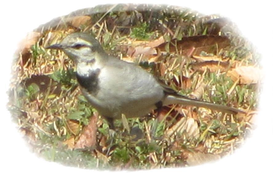 20200126_野鳥観察会_3.jpg