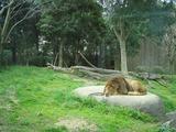 ライオンロックヒーター