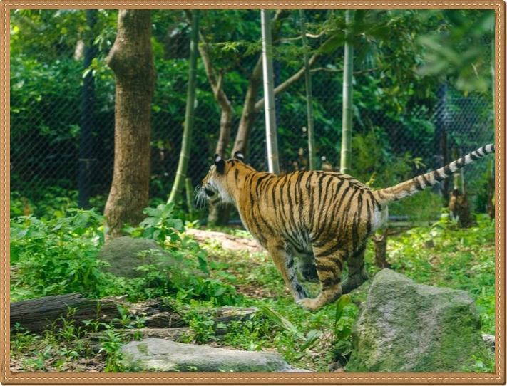 到津の動物写真_0526.jpg