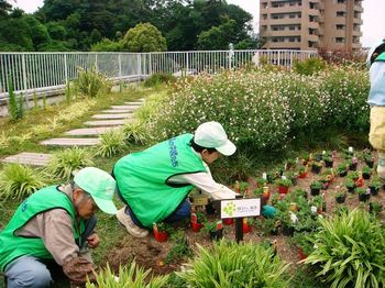 reaf_garden.JPG