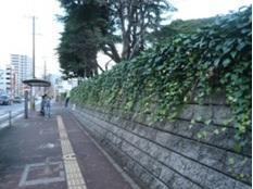 バス停前のツタ-1.jpg