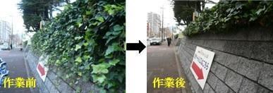バス停前のツタ-4.jpg