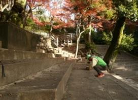 しいのみ-3.jpg